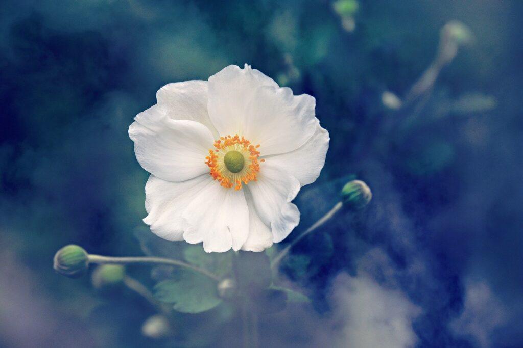 野花の画像
