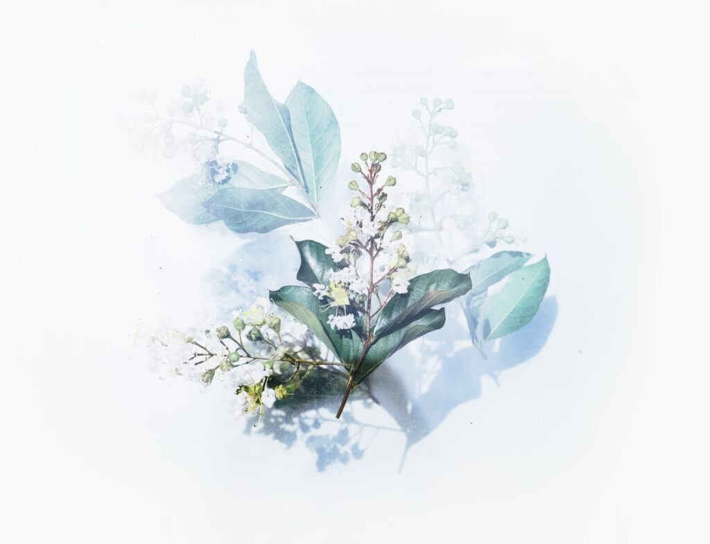 綺麗な観葉植物の画像