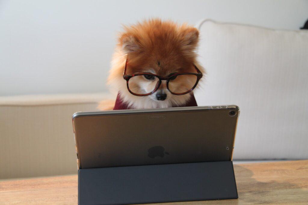 子犬が眼鏡をかけPCを操作している画像
